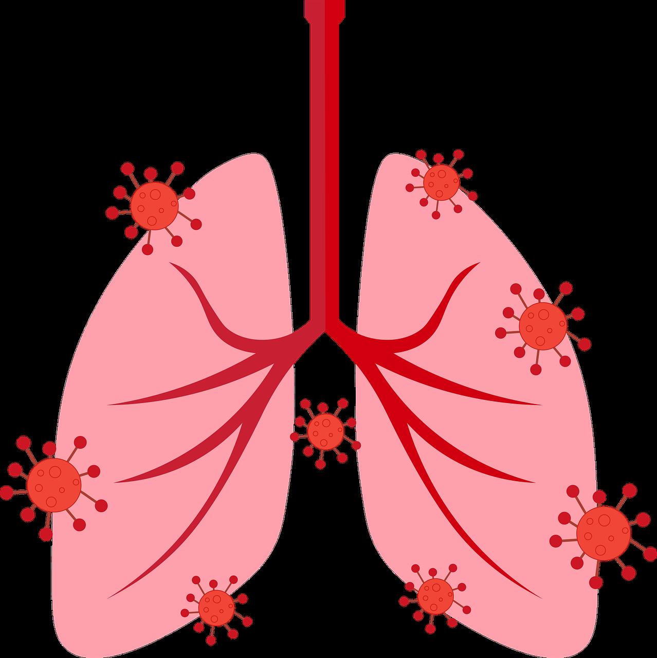 breath, lungs, respiratory