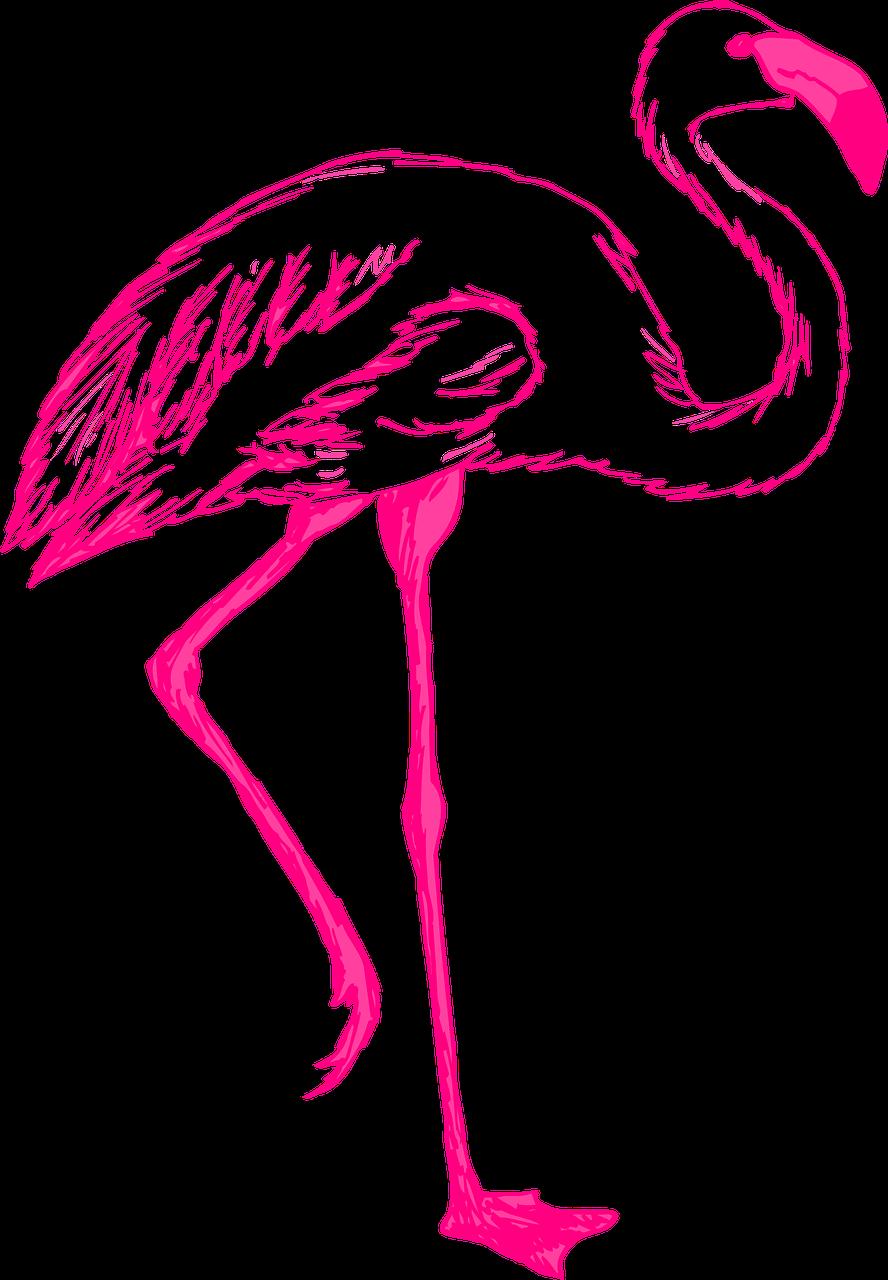 pink, bird, wings